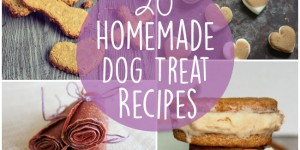 20 Homemade Dog Treat Recipes